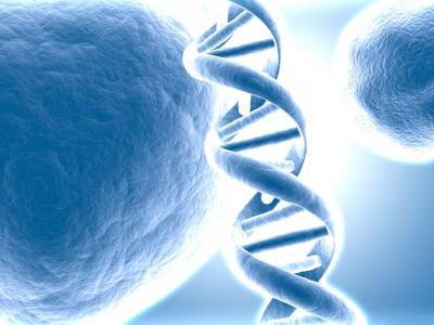Transmutation ADN - mémoires cellulaires